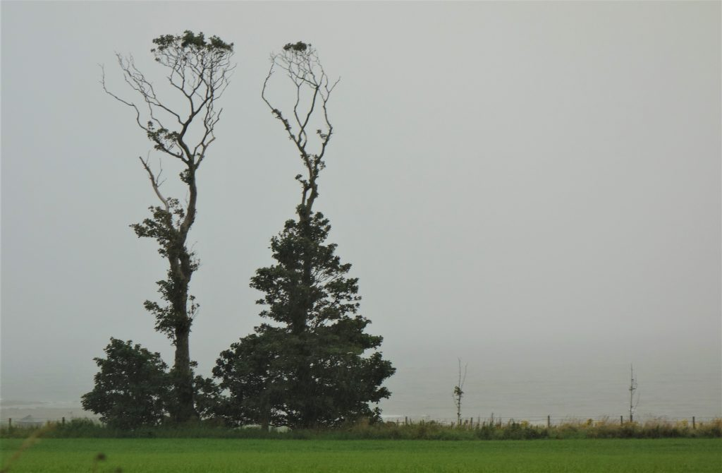 Coastal Road Trip, Portencross, Trees
