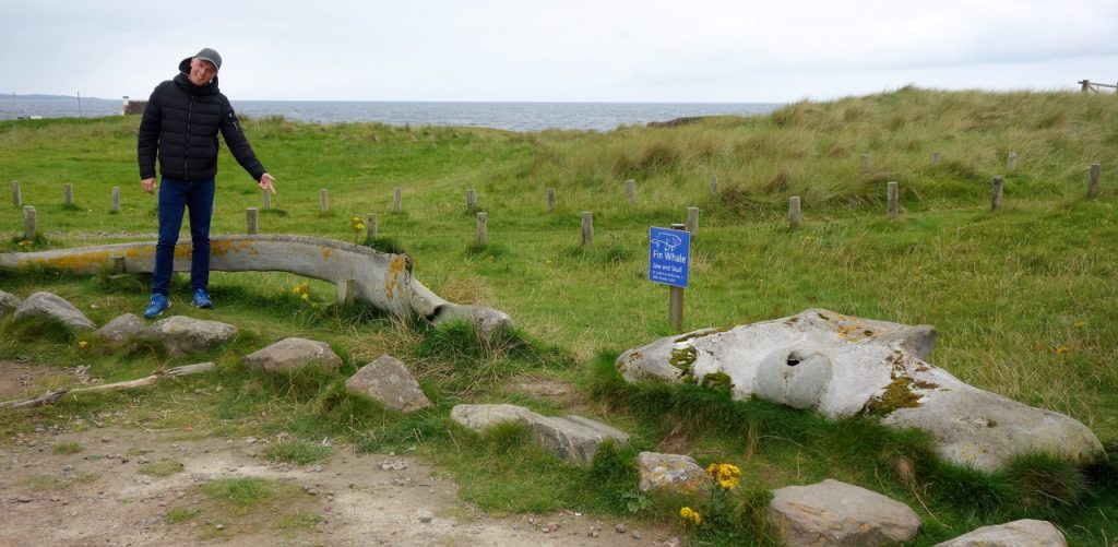 Coastal Road Trip, Clachtoll Beach, Fin Whale, Jaw, Skull, ,Car Park, Jarno