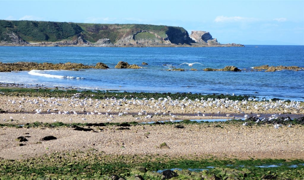 Coastal Road Trip, Cullen, Bay, Beach, Seagulls
