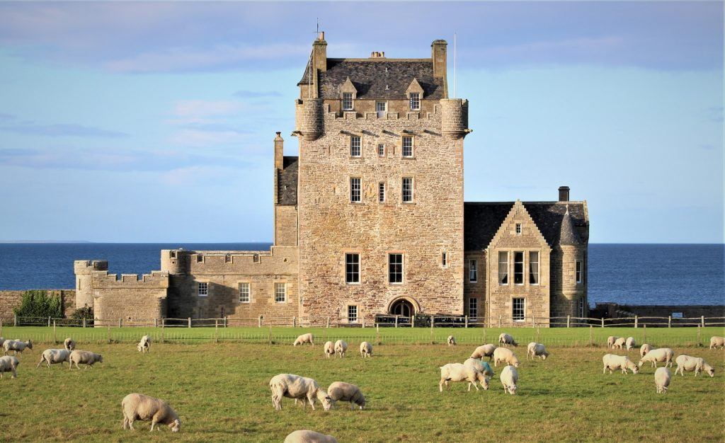 Coastal Road Trip, Ackergill Tower, Sheep