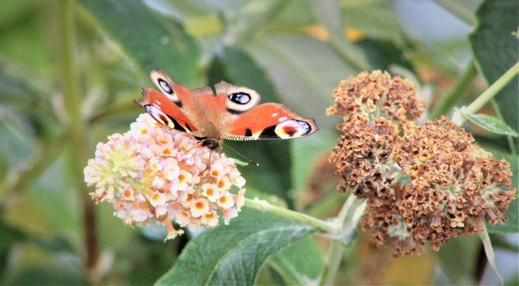 Coastal Road Trip, Cromarty, Butterfly