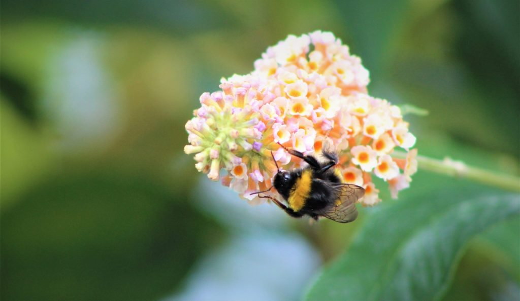 Coastal Road Trip, Cromarty, Bee