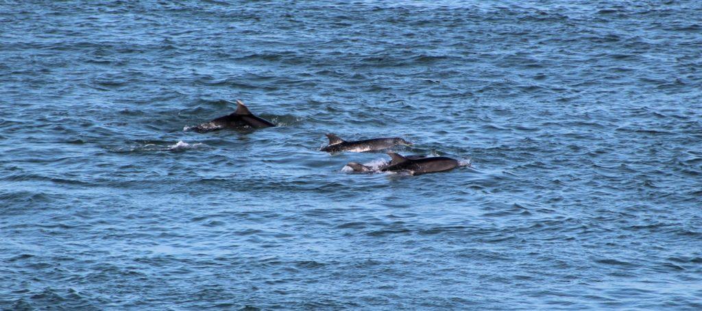 Coastal Road Trip, Montrose, Scurdie Ness, South Esk, Dolphins