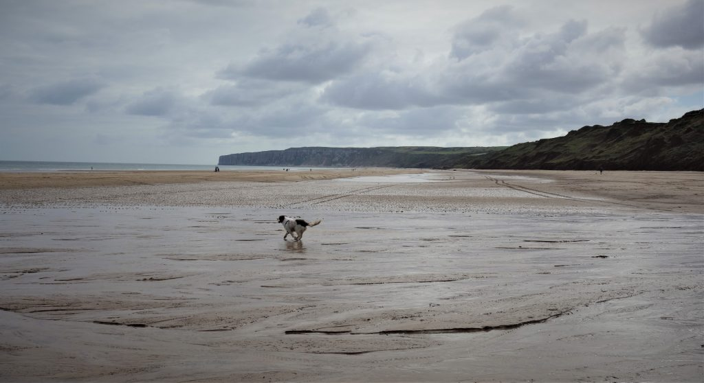 Coastal Road Trip, Hunmanby Gap, Beach, Dog