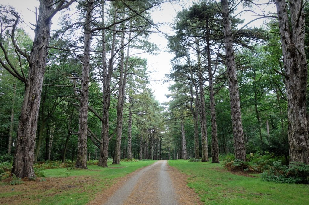 Coastal Road Trip, Sandringham, Woodland, Country Park