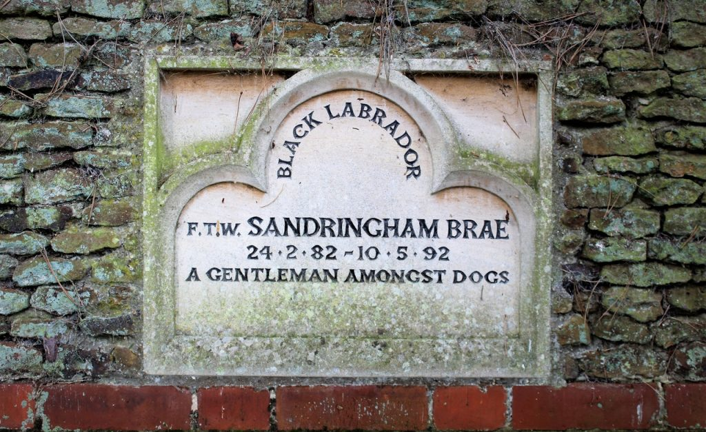 Coastal Road Trip, Sandringham, Queen's Dog, Black Labrador, Sandringham Brae, A Gentleman Amongst Dogs,