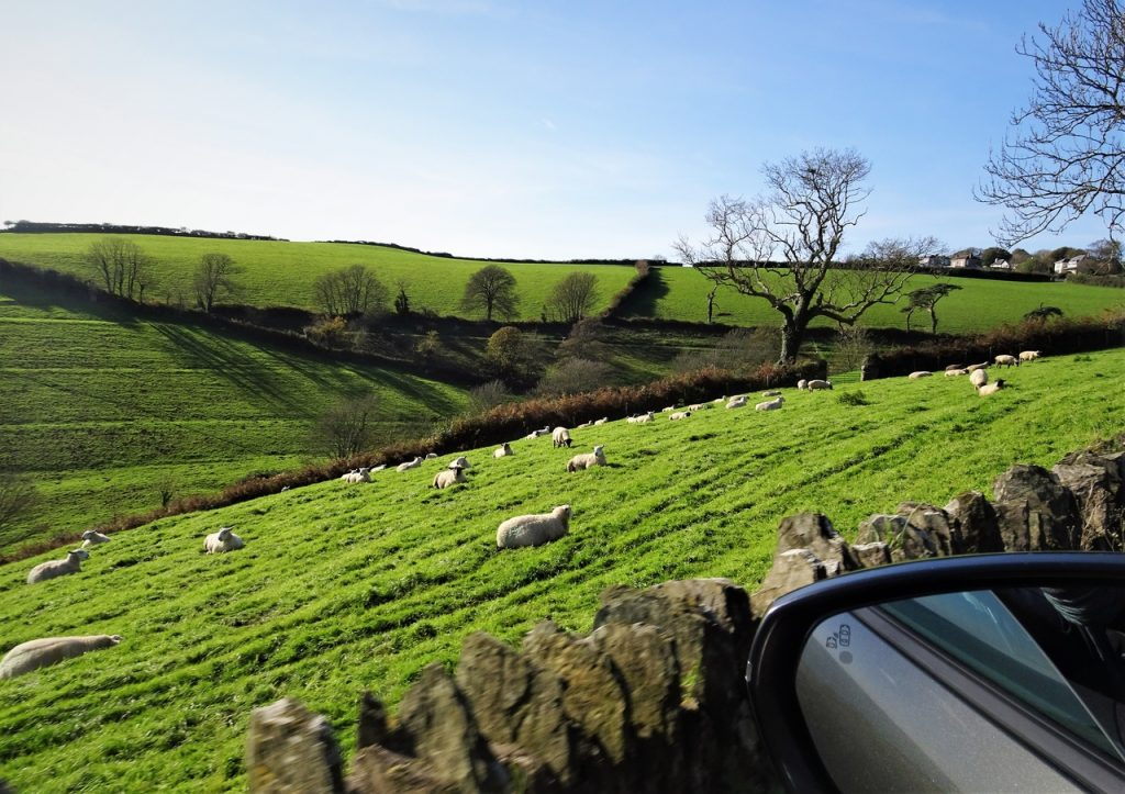 Coastal Road Trip, Strete, Forest Cove, Sheep, Green Fields, Devon