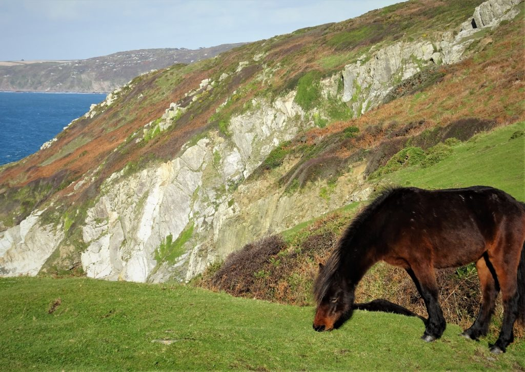 Coastal Road Trip, Rame Head, Horse