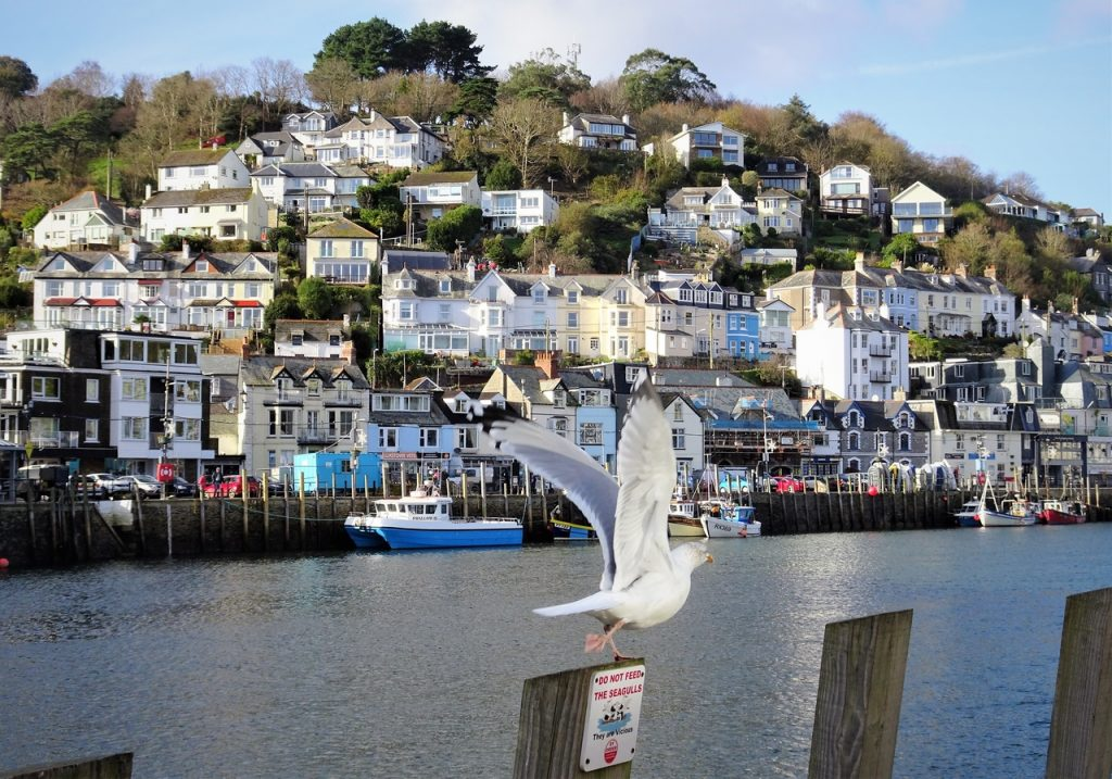 Coastal Road Trip, Looe, West Looe, Seagull, East Looe River