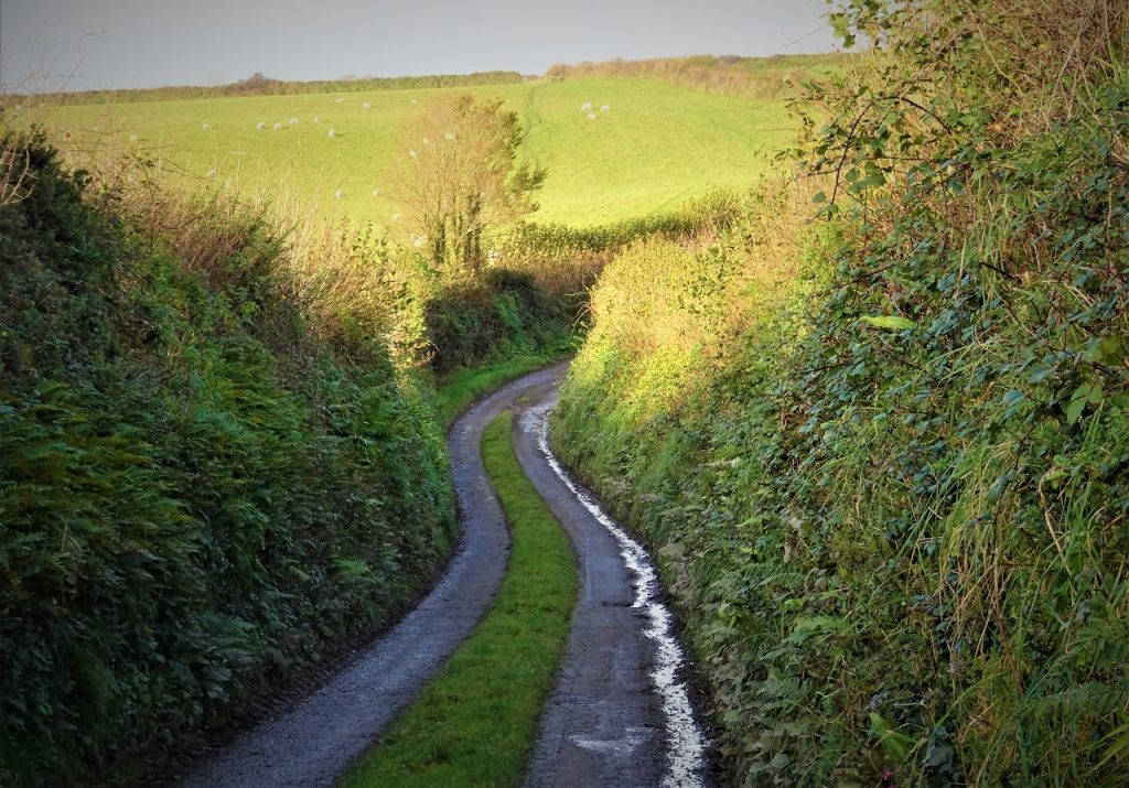 Coastal Road Trip, Lantivet, Narrow Lane, Cornwall