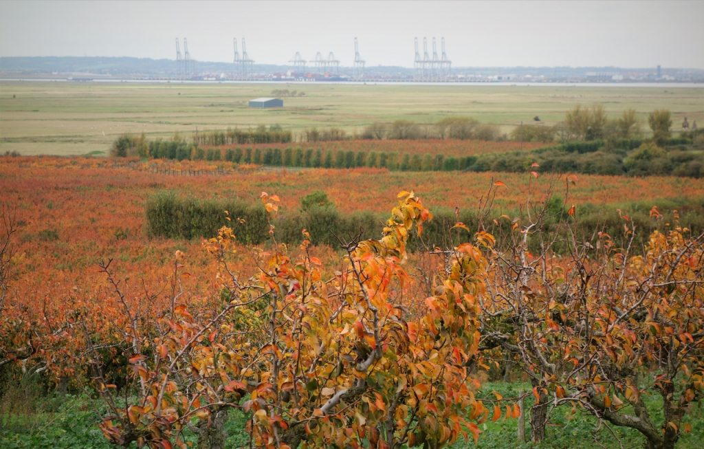 Coastal Road Trip, RSPB Northward Hill, Thames Estuary, Autumn, Colours, Fall Colors, DP World London Gateway Port, Stanford-le-Hope