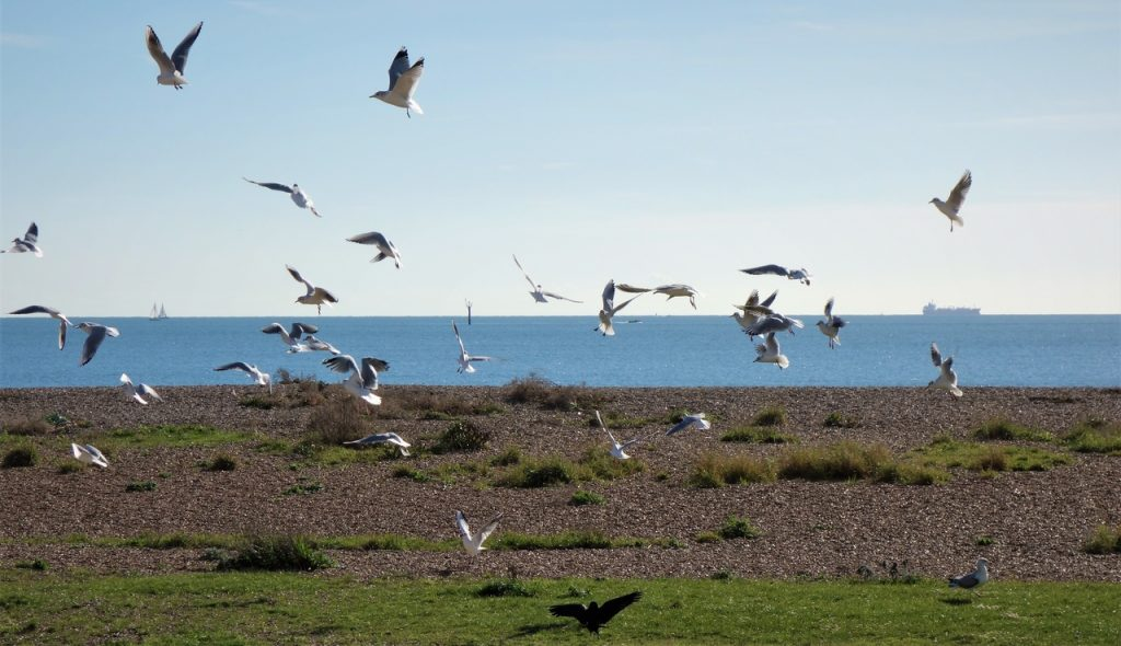 Coastal Road Trip, Eastney, Beach, Seaguls, Esplanade