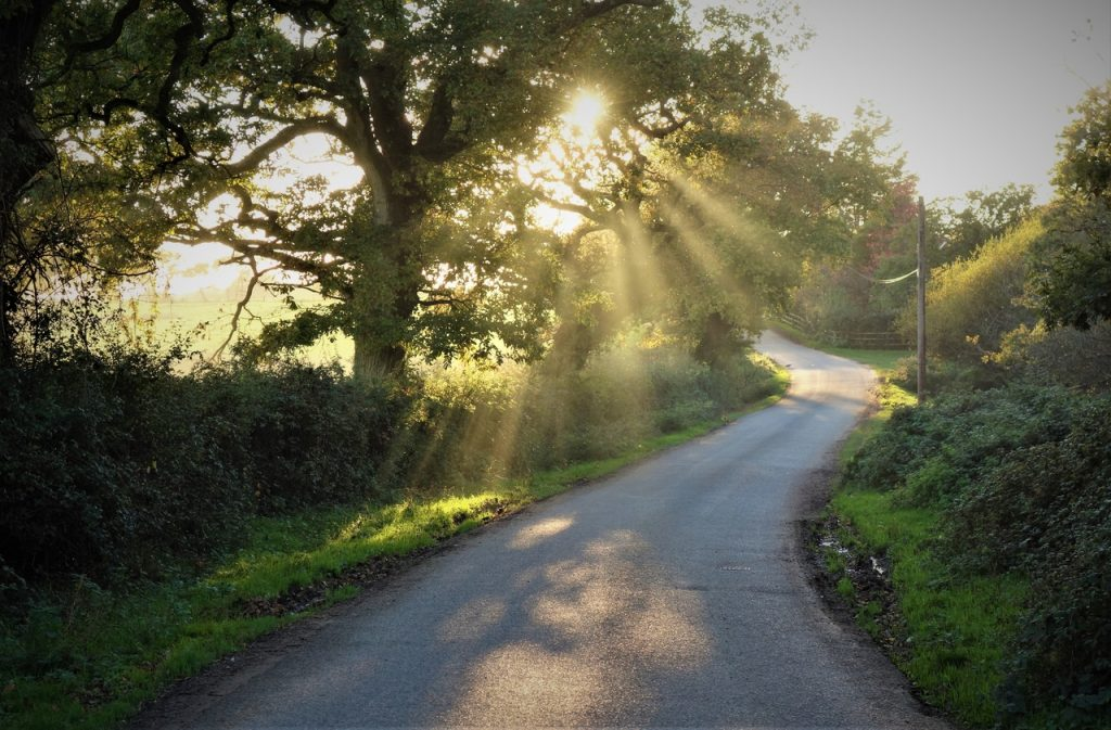 Coastal Road Trip, St Leonards Grange, Sunstar, Sunbeam, Lane, Road, Tree, Brockenhurst, Hampshire